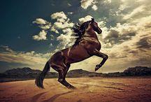 symbole cheval