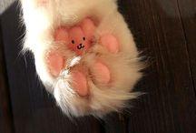 cute animal stuff / by Kristi Gibbs