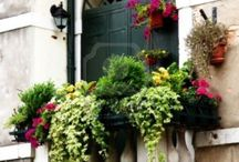 květiny,parapety,truhlíky,květináče