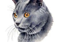chat gris portrait