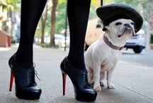 pets  / by Nicole Dean