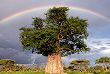 Botswana Flora