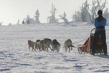 PSÍ SPŘEŽENÍ CÍNOVEC / Přijeďte si užít pravou severskou romantiku, plnou adrenalinu! Naši psi Vás přenesou v čase o pár desítek let zpět do dob, kdy na drsném severu nebylo jiného dopravního prostředku, než-li psího spřežení. Za jakéhokoliv počasí museli eskymáčtí lovci vyrážet se svými psi shánět potravu napříč zasněženou krajinou.  Více info: http://www.impresio.eu/zazitek/psi-sprezeni-cinovec