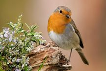 birds_foto