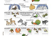 zvierata v zime malovane citanie