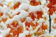 Snow❄⛄ / Мое любимое время года-это зима. Люблю снег!