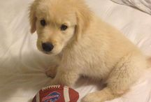 Bills Pets / We're always on the lookout for our furriest Bills fans!