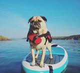 Red Dogs / We love seeing your loyal canine buddies out on SUP adventures with you - tag your photo with #redsuppup for a chance to be featured!