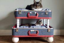 For the Cats / DIY Projekte für Katzen