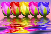 Bright colors / Colorful