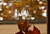 Autumn gives me peace