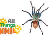 Spiders and Insects Theme - Preschool