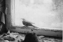 birds