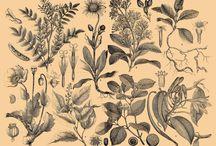 Brockhaus Pflanzen
