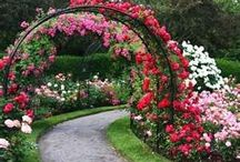 rosegardens