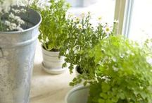Kids Gardening Projects / Fun projects to do with the kiddos in and for the garden.