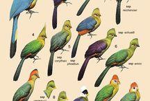 Birds toerako