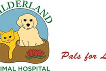 Veterinary Blog / Check out our blog, offering information, facts and suggestions for keeping your pet healthy!