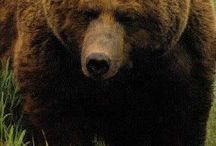 Bears / Bears are cool.