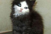 Cats ( Kediler )