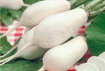 Légumes & Potager / Voici tous les ingrédients indispensables pour réussir son potager, et quelques astuces pour l'entretenir et cuisiner de bons légumes !