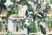Plantas in