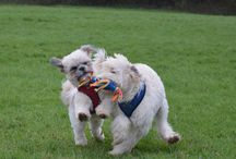 Puppy Club / The Poppy and Pals Pet Care Puppy Club 2015