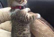 Gato gatito