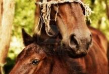 HorsesPhotography