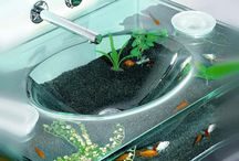 aquarium idées