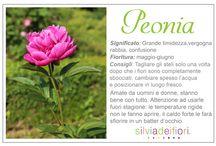 Un fiore per ogni occasione!