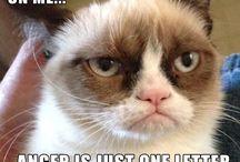 Love that Grumpy Cat / by Lyndsey Weidow