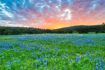 Texas Wildflowers / This is a collection of wildflowers, which include bluebonnets, indian paintbrush, indian blanket, and many other Texas wild flowers