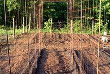 Vege head. Tony's vege garden