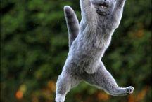 Funny Crazy Cat!!