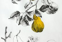 Botanical illustration