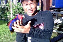 Nuri Birds / Rare Birds from Papua