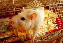 Prawa zwierząt / Ochrona praw zwierząt