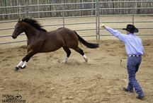 Fundamentals Series / The first level of the Downunder Horsemanship Method lays out the steps to build a trusting, respectful, safe and willing partnership with your horse.