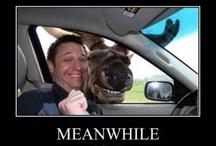 I <3 moose!!