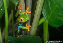 Natura selvaggia / Fotografie di animali