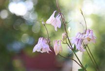 Menolippu Maalle - My garden