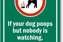 Dogs pooping