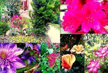 Édesanyám virágai <3  :)