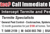 Pest control Brisbane / Pest control bargain