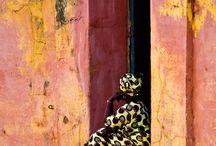 Fotos  Senegal. Maragda