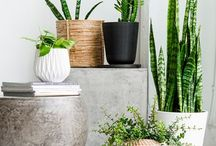 PLANTS BEAUTY