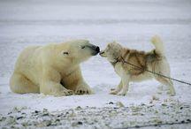 Adorable Animals / by Julie Burchardt