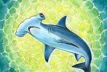 Рыба-молот