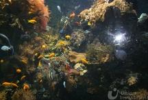 Oceanarium Genua